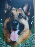 German Shepherd Blank Greetings Cards (10 Pack)